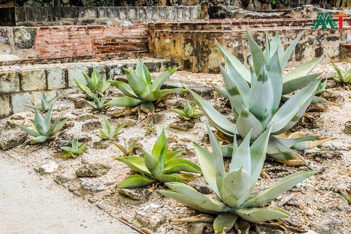 Ethnobotanic Garden 2 In Oaxaca Mexico