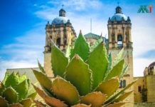Oaxaca vacation ideas