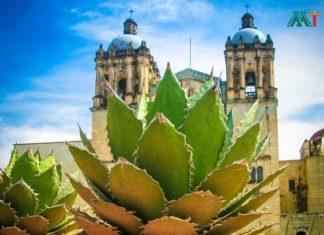Oaxaca vacation ideas
