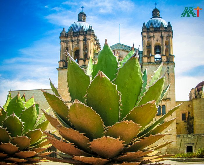 Oaxaca Vacation Ideas (Cathedral With Agave Plant)